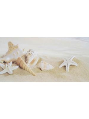 Dekorcsempe, Beryoza, Fresia Seashell 3 Beige 25*50 cm I.o.